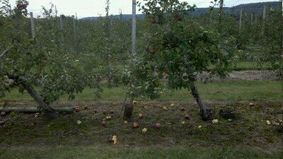 Project 365-261: Apple Picking
